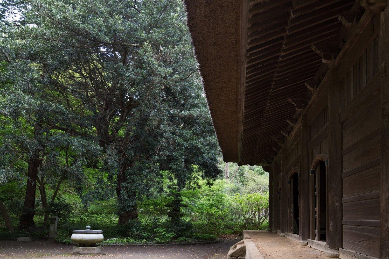 樹齢は600~700年。老樹のため、木の中は人が入れるような空洞がある。左巻きにねじれているのも特徴的だ。