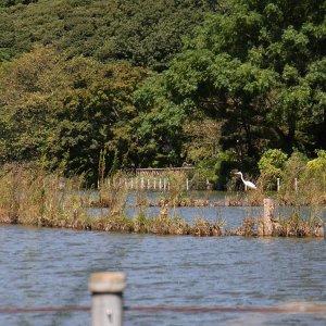 秋の善福寺川ぐねぐねさんぽ。武蔵野の水辺はどこか懐かしい
