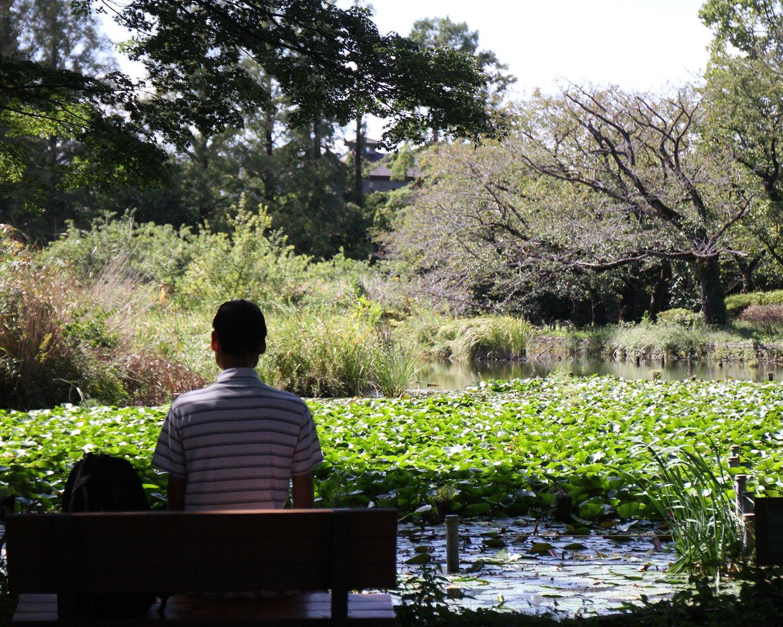 アシやハスが覆う静かな雰囲気の下の池。