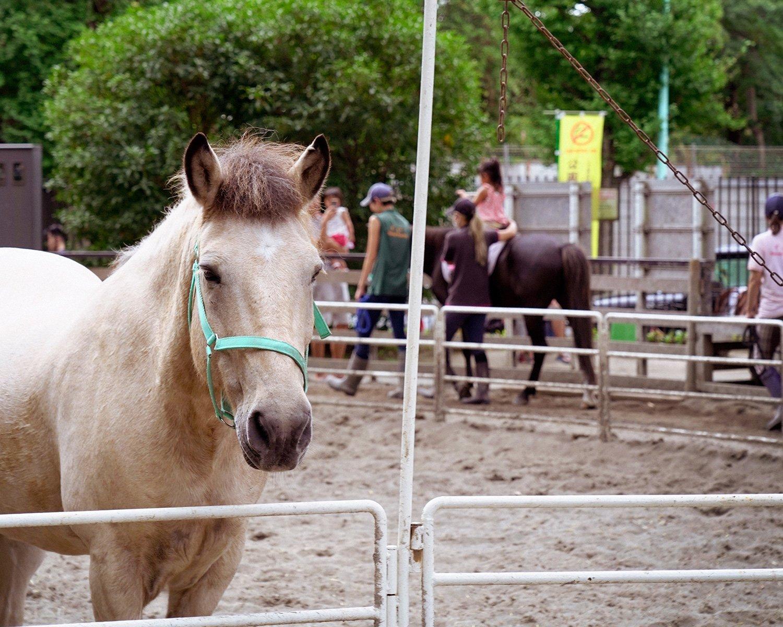 公園内のポニーは最大7頭。引き馬乗馬は小学校6年生までの子供のみ可。