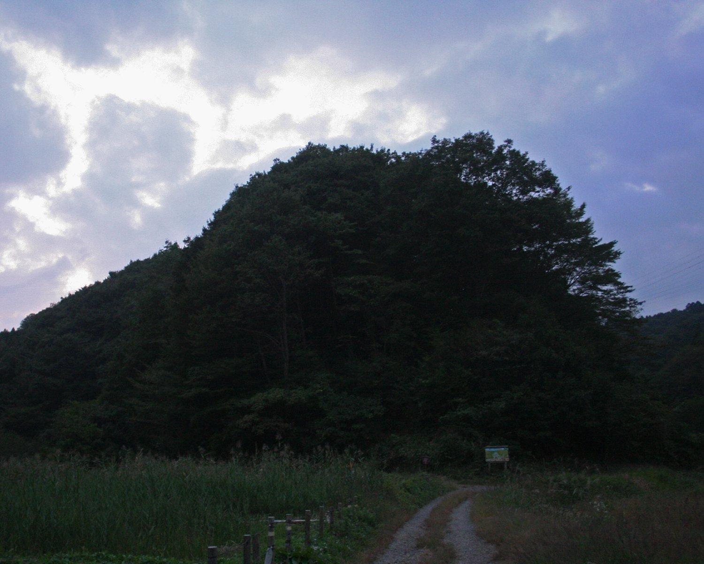 夕暮れの横沢入で、触手を伸ばす王蟲。2008年撮影。
