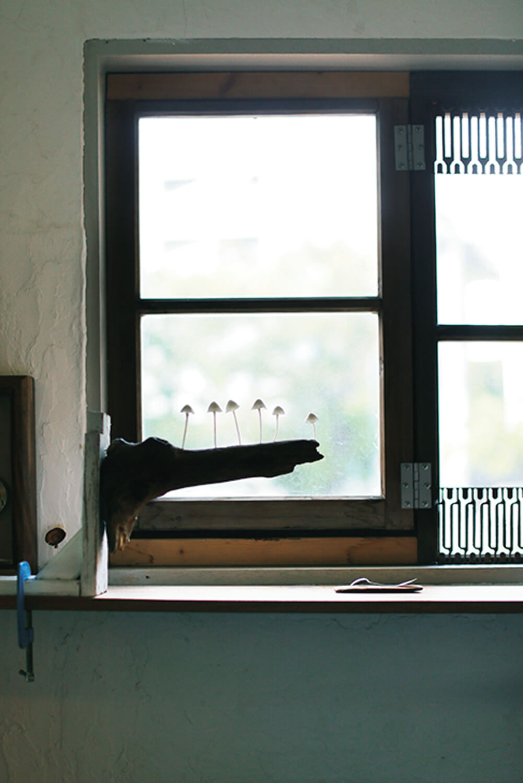 青梅から持ってきた窓枠。