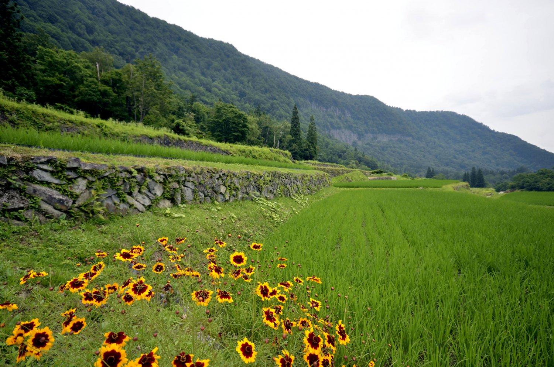 「日本農村景観100 選」の石垣田。明治の開墾だが古代遺跡のよう。