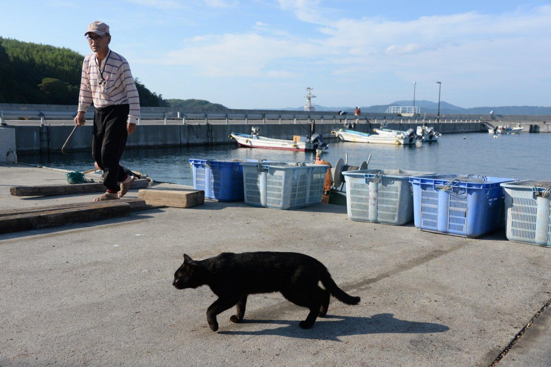 「ネコで来たのかい?魚の水揚げのときが絵になるよ」と漁師さん。