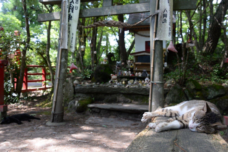 狛犬のように対になって寝転ぶネコ。この2匹は神社が定位置とか。