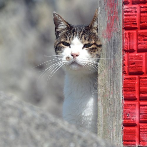 宮城県石巻市田代島~ネコ好きまっしぐら!モフモフ散歩の島時間