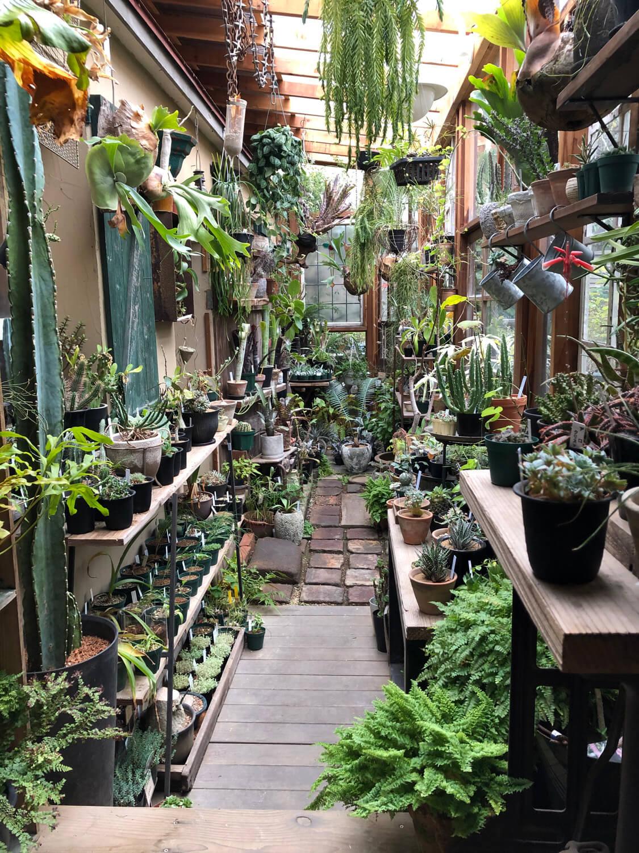 中庭の半分がサンルームのようになっている。