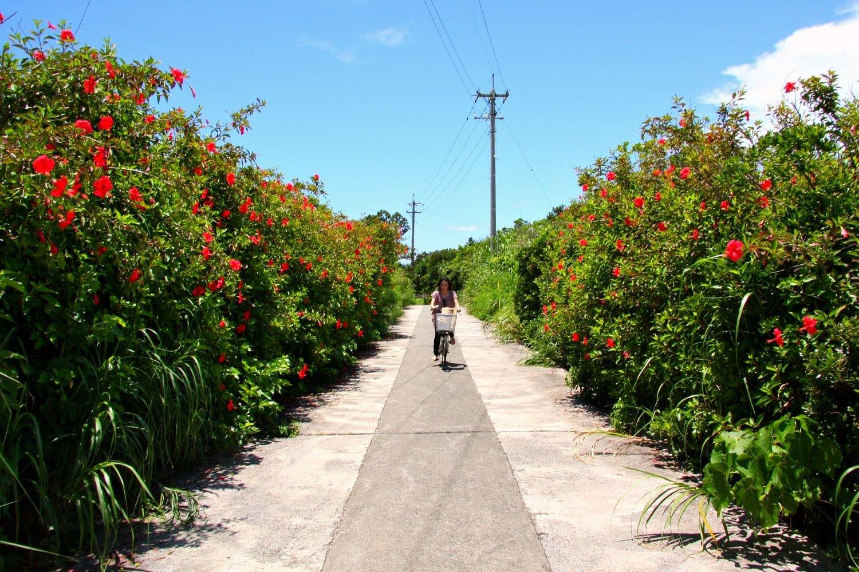 久高島 サイクリング