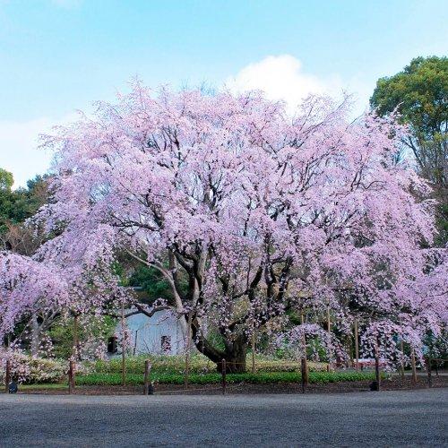 巣鴨駅からはじめる巣鴨・駒込・王子散歩~おばあちゃんの街から桜の名所めぐりコース
