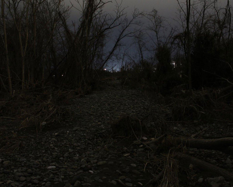 河辺荒野で見つけた枯れ木の林。詳細は次週。