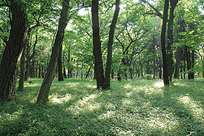 井の頭自然文化園と吉祥寺通りを隔てた南側に、武蔵野の自然を残した雑木林が広がる。