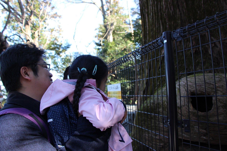 不思議な形の「たこ杉」をのぞいてみる。