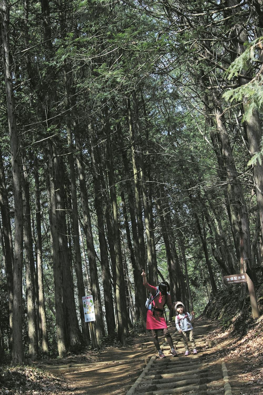 明るい樹林帯を歩く。