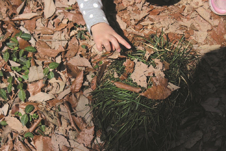 落ち葉を集めて自然観察。森には子どもの好奇心をくすぐるものがたくさんある。