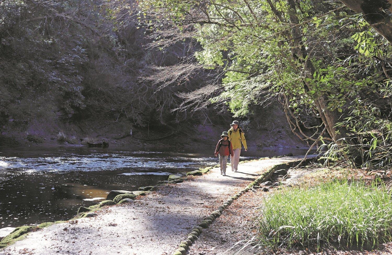 コロナ 滝 養老 の