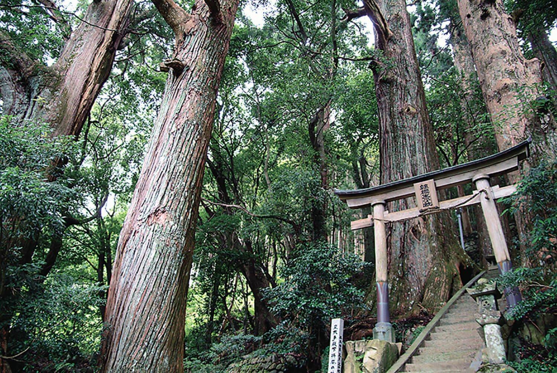 野中の一方杉がそびえる継桜(つぎさくら)王子。真下に名水百選の「野中の清水」もある。