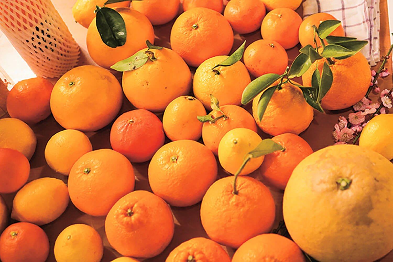 『紀州 原農園』で栽培される柑橘は40種類以上。