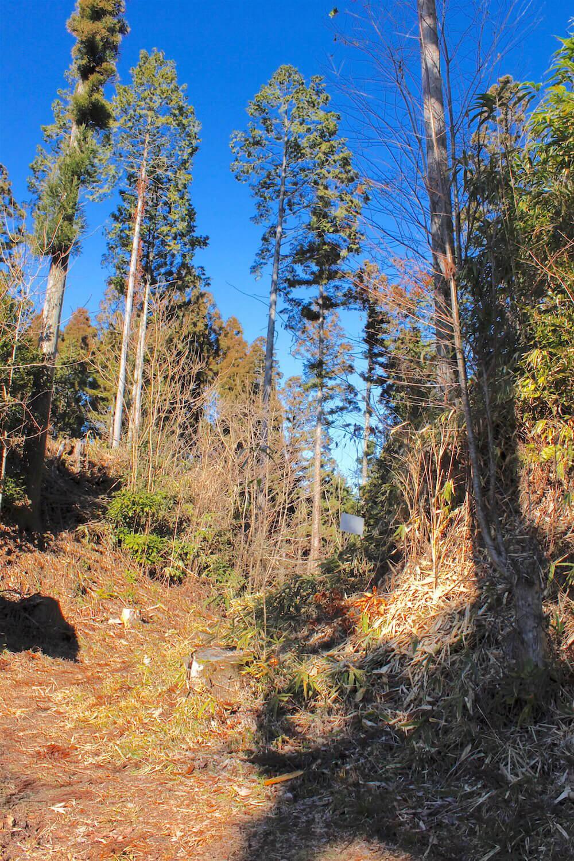 大堀切を横から見る。草木に埋もれても落差がよくわかる。