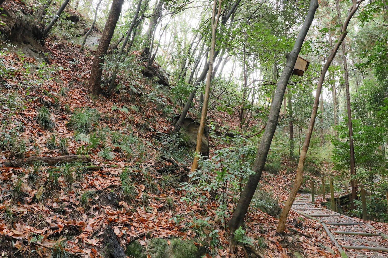 搦手道の登城路入口付近。頭上から乾曲輪が覆いかぶさる。