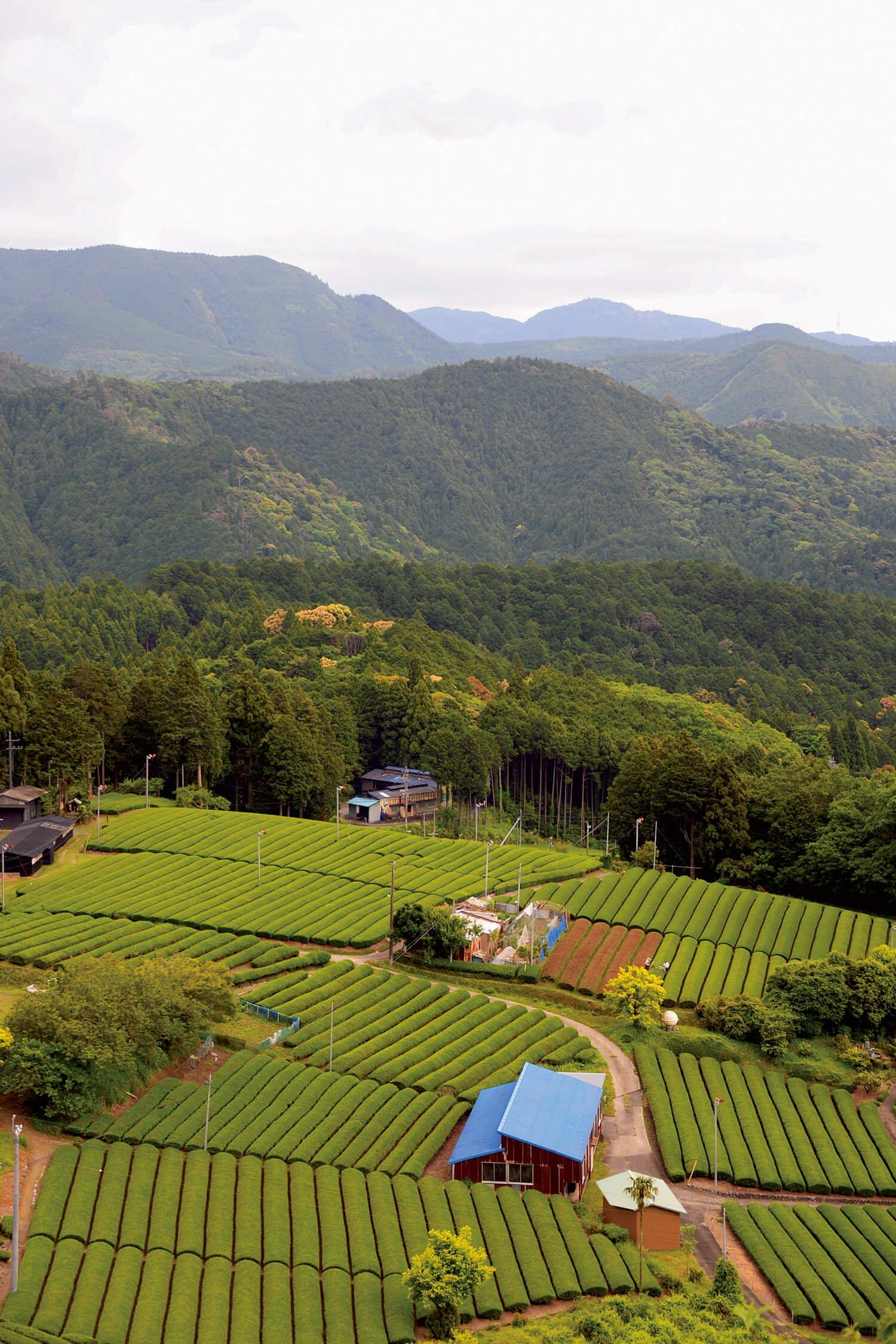 立体集落の茶園