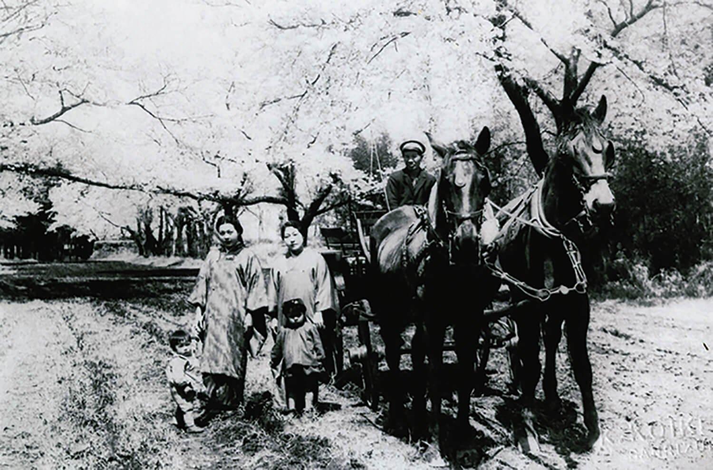 立派なサラブレッドが引く下総御料牧場の馬車。大久保利通が駆け上がったという野馬土手とサクラ並木が後ろに見える。現在のこひつじ保育園付近で昭和10年代に撮影。