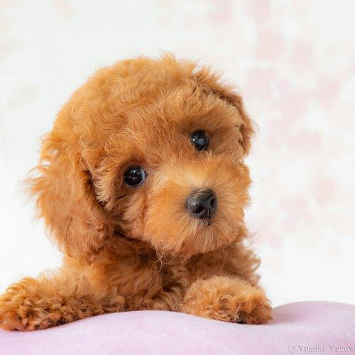 愛犬の目線が欲しい! ~マネするだけ! エキスパート直伝 ペット撮影のコツ②~