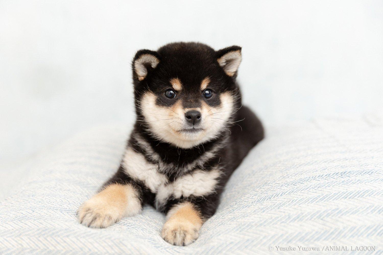 かわいいカメラ目線写真の撮り方 犬4