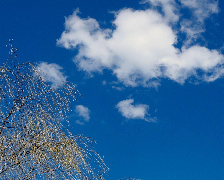おだやかな日に浮かぶ、モコモコとした雲。水蒸気を多く含む。