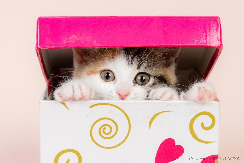 猫じゃらしで、もっとかわいく猫写真 ~マネするだけ! エキスパート直伝 ペット撮影のコツ③~