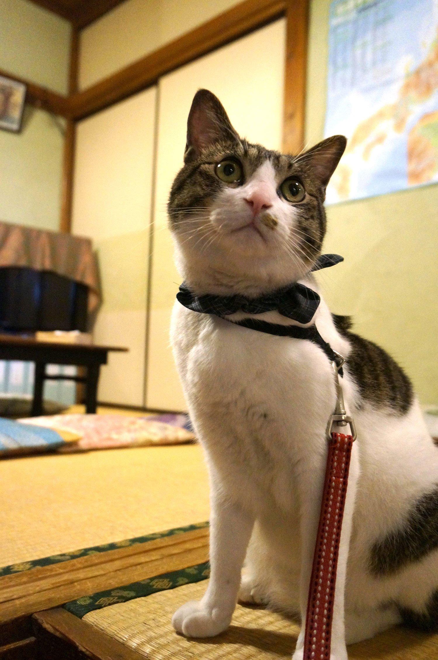 当初はお店で里親を募るつもりだったが、「情が移っちゃったのと、お客さんからも気に入られて『どこにもやらないで!』と言われるようになった」ことから、お店の看板猫に。