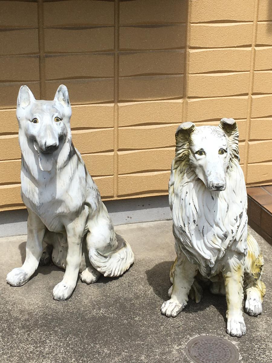 色あせた犬(2020年・稲田堤)