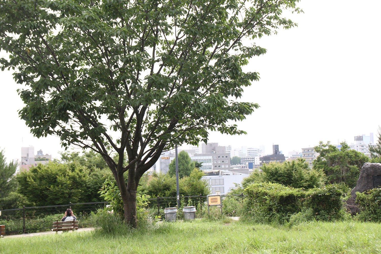 冬の快晴時は富士山も遠望できる西郷山公園。地元の人たちの憩いの場。