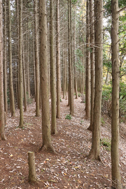 雌嶽は幅は狭いがきれいに整地された平坦地になっている。