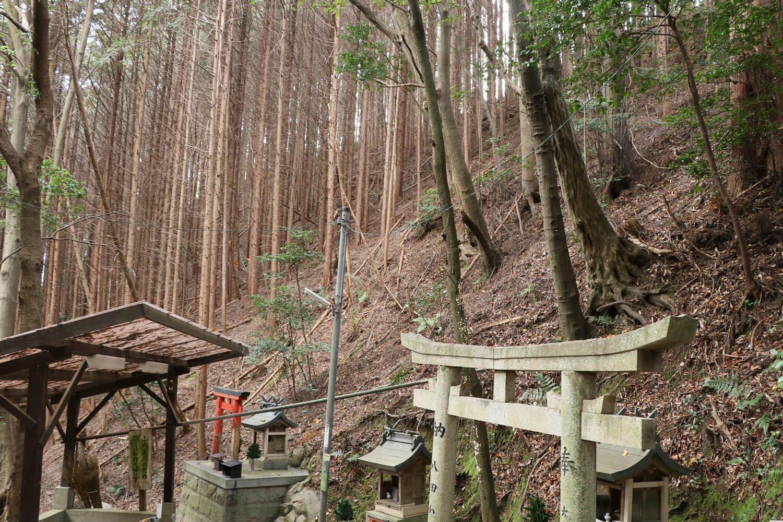 雌嶽東側の斜面。自然地形がここまで険しいと、あまり城として手を加える必要がなかったのかも。