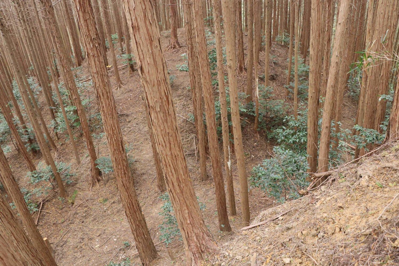 堀切の底までの高低差は2~3mはある。
