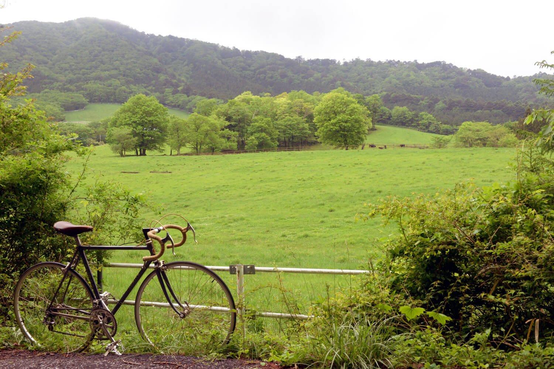 市町境に近い豊月平放牧場。遠くで牛の群れが草をはむ。
