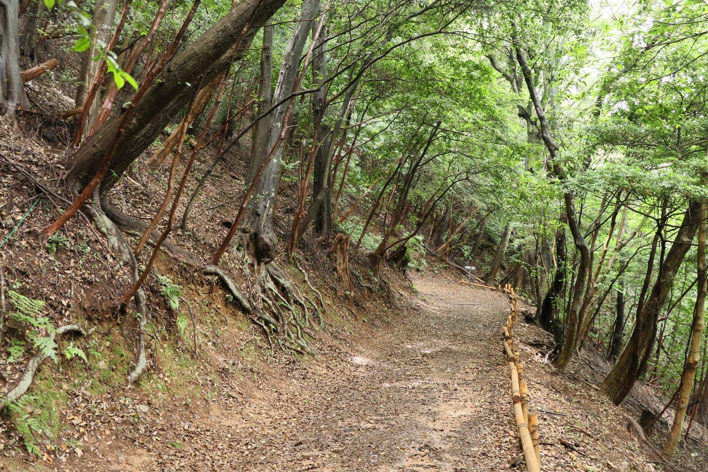 登山口からしばらくはゆるやかな登り道。