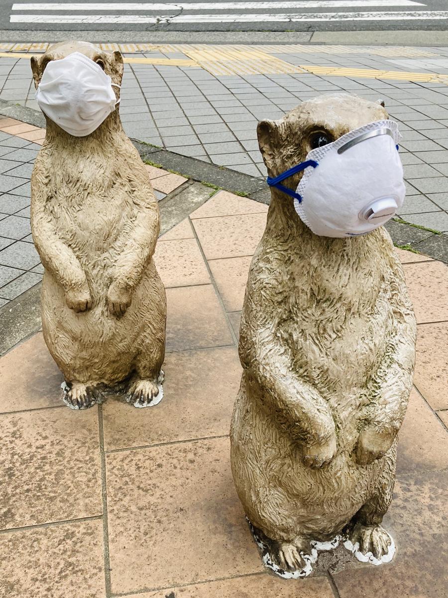 立派な防塵用マスクを着けたプレーリードッグ(清瀬)