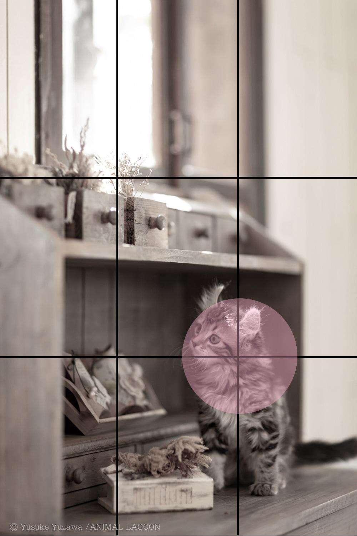 グリッドを使った撮影イメージ