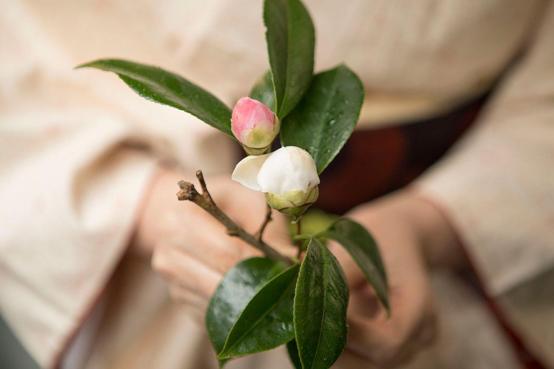 散歩道で見つけた早咲き椿の白玉と西王母(せいおうぼ)。「つぼみの中の芯が少し見えるのがいいの」。