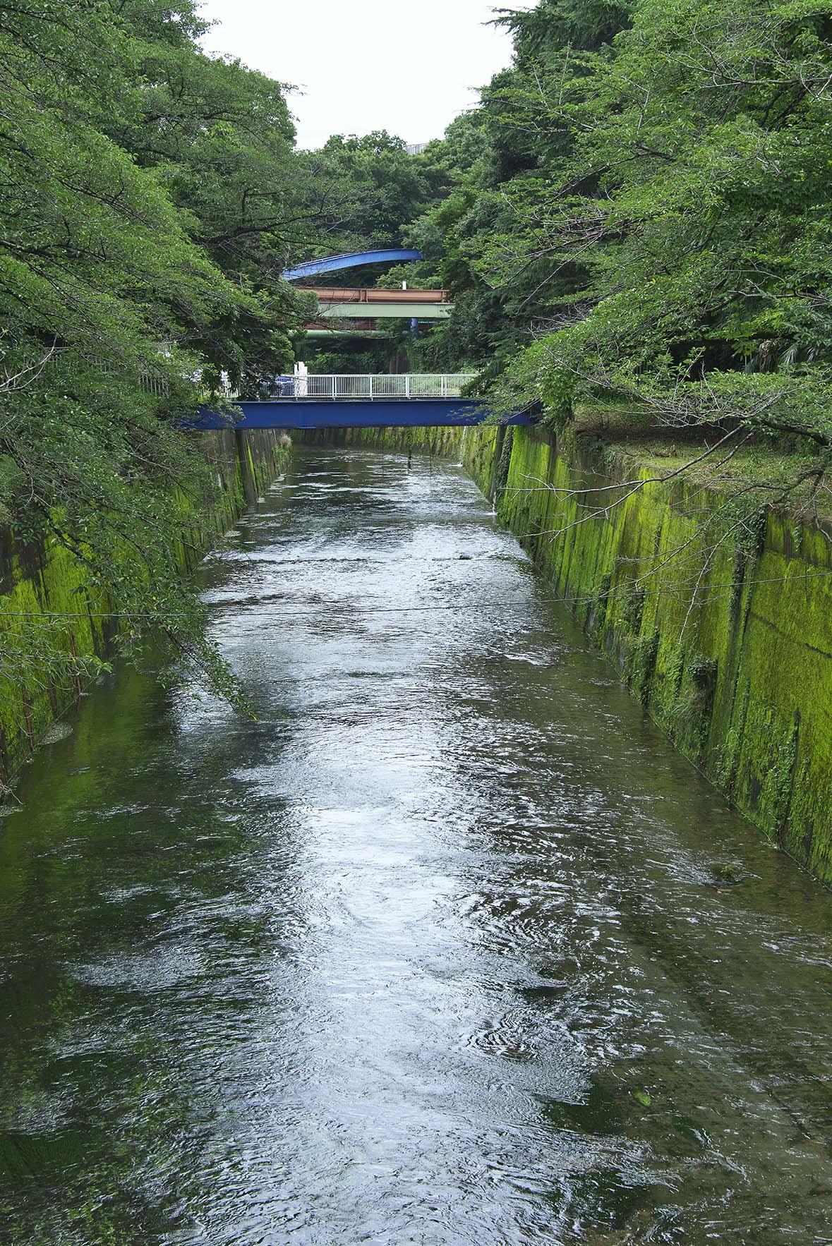 右手がプールと練馬城跡の丘。現在はハイドロポリスだが以前はピクニック広場だった。創業当時は池やプールは石神井川の水を利用していた。