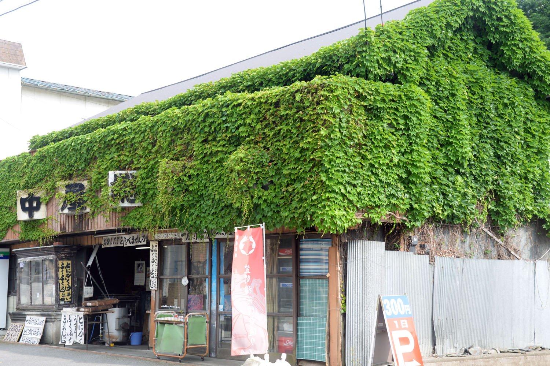 壁面を草が覆う、とある店。建物なら鑑賞だが、植物なので観賞か。