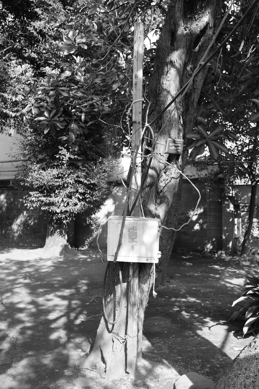 吉祥寺の武蔵野八幡宮で。 樹木が生きたまま電信柱的に利用されている。電線が植物のツタ的。モノクロで撮ると、混乱具合が強調されて、面白い。 ●F3.6 ●1/200秒 ●ISO320 ●モノクロ