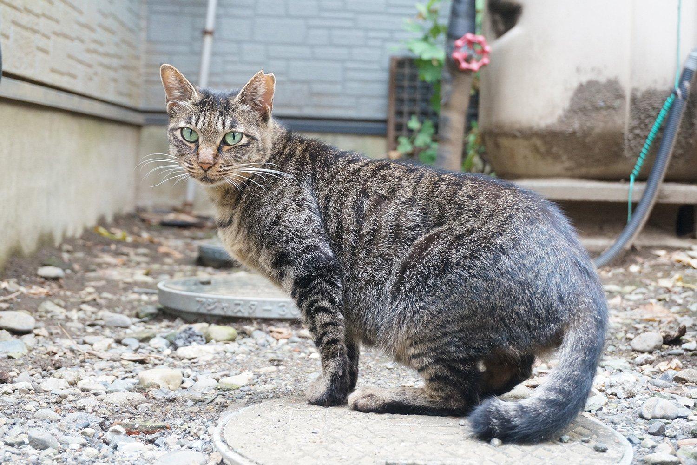 ちなみに現在の太宗寺は猫のたまり場に。「吾輩は猫である」みたいな顔をした子が多い。