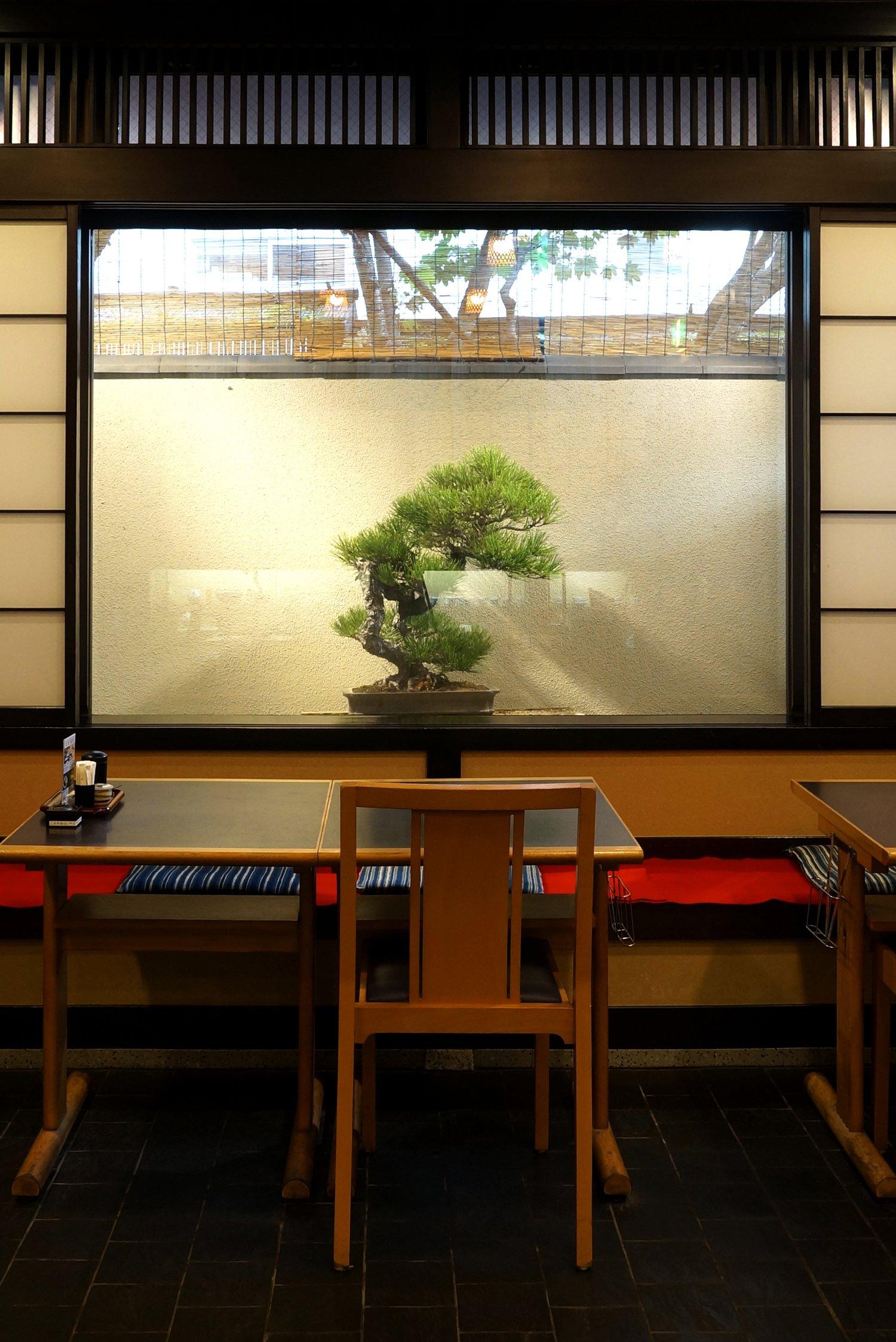 この日の盆栽は松。店内にいても季節を感じる。