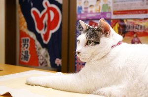 nishiogi_tenguyu_18