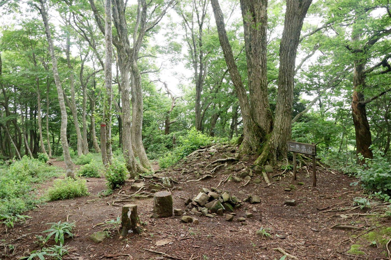標高473.8mの一乗寺山の山頂から三の丸全体を眺める。幅は狭いが縦に長く、広さはそこそこある。