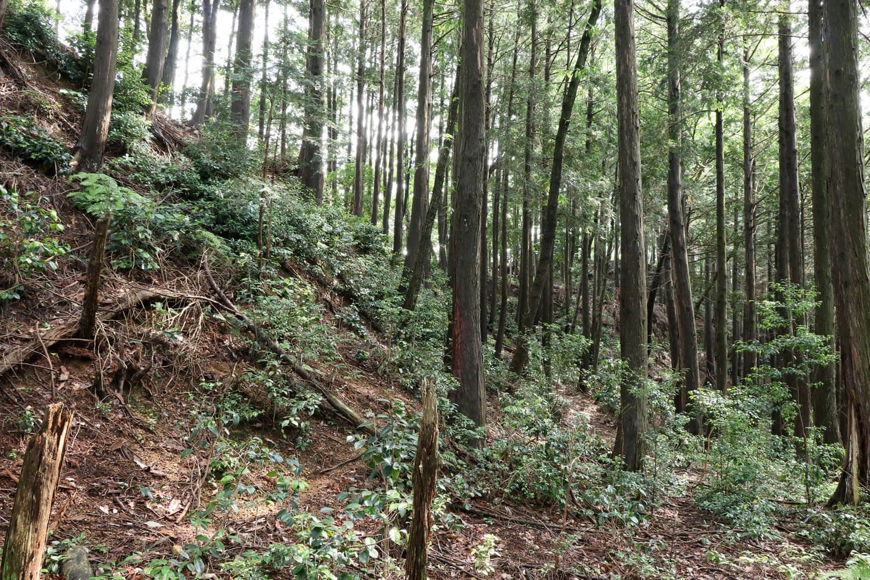 大手道。低木に埋もれかけた細道が伸びるのみ。