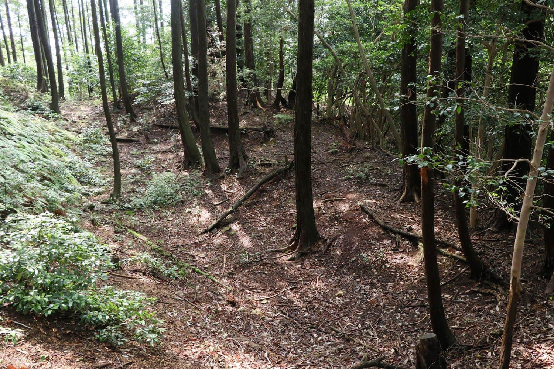 木立の中にズバッと伸びる空堀と土塁。