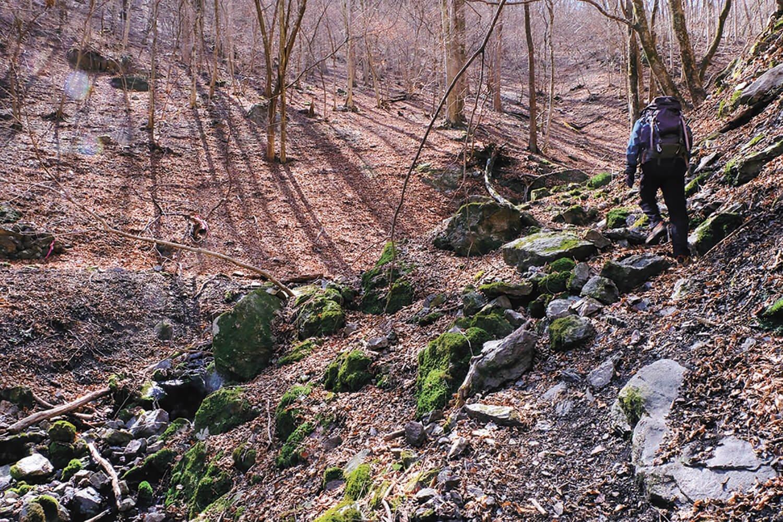 ウノタワへは横倉入の源流部を登って行く。樹種としてはブナとミズナラが多いところだ。